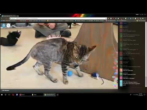 Olympian Kittens - Follow Up Visit Periscope 2018-03-18