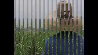 Los Alegres Del Valle - La Caña De Azúcar (Cumbia Colombiana Instrumental) ORIGINAL
