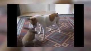 Кролик доводит собаку до безумия! Супер прикол