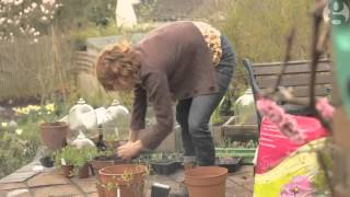 Grow your own raspberries and blueberries - video