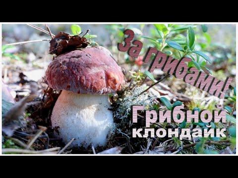 Вопрос: Какова карта грибных мест в Кировской области (2020 год)?