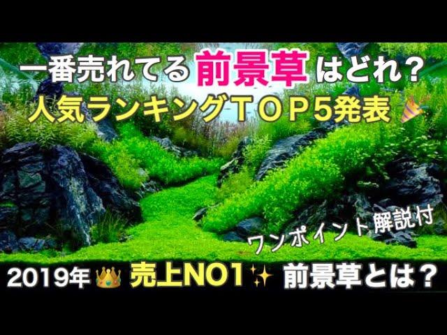 発表!前景草 人気ランキング Best52019年に最も売れた前景草TOP5を ...