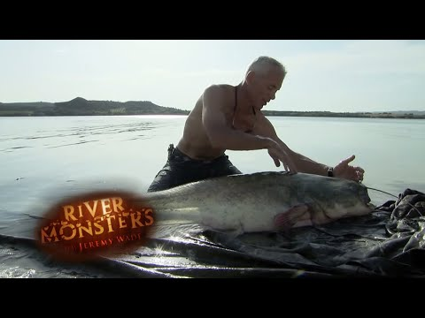 Spanish Wels Catfish Nearly Bites Jeremy | CATFISH | River Monsters