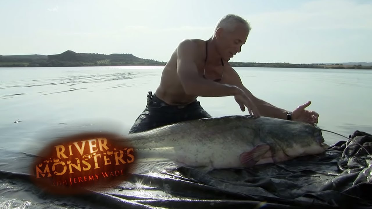 Download Spanish Wels Catfish Nearly Bites Jeremy | CATFISH | River Monsters