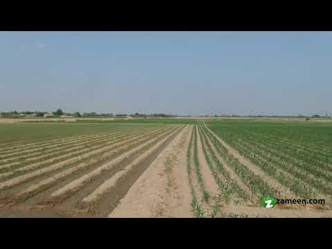 63 ACRE AGRICULTURE LAND FOR SALE NEAR OKARA