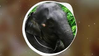 Elephants status videos.കുഞ്ഞിപ്പെണ്ണ്..