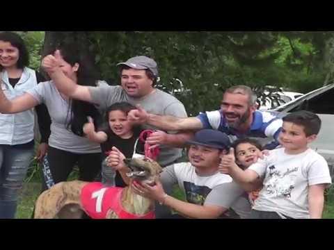 Cerca de un millar de argentinos vienen a Fray Bentos a carreras de galgos