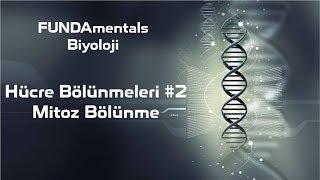 Hücre Bölünmeleri #2 Mitoz Bölünme