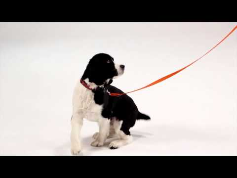 Dog Training: Recall and Teaching Your Dog to Come When Called