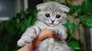 Смешные коты, кошки и другие животные (funny cats 2019) – НЕЛЬЗЯ СКУЧАТЬ, НОВЫЕ ПРИКОЛЫ