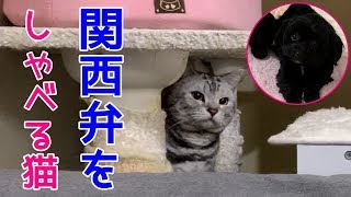 姉妹 チャンネル 猫 猫が羨ましい。人間より稼ぐ有名YouTuber猫がすごい理由と、なる方法