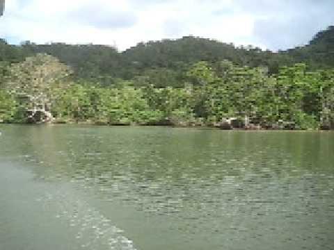 西表島の浦内川。ジャングルの中を進むボート