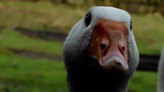 Inne zwierzęta :)