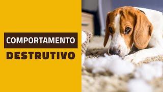 Cachorros com COMPORTAMENTO DESTRUTIVO