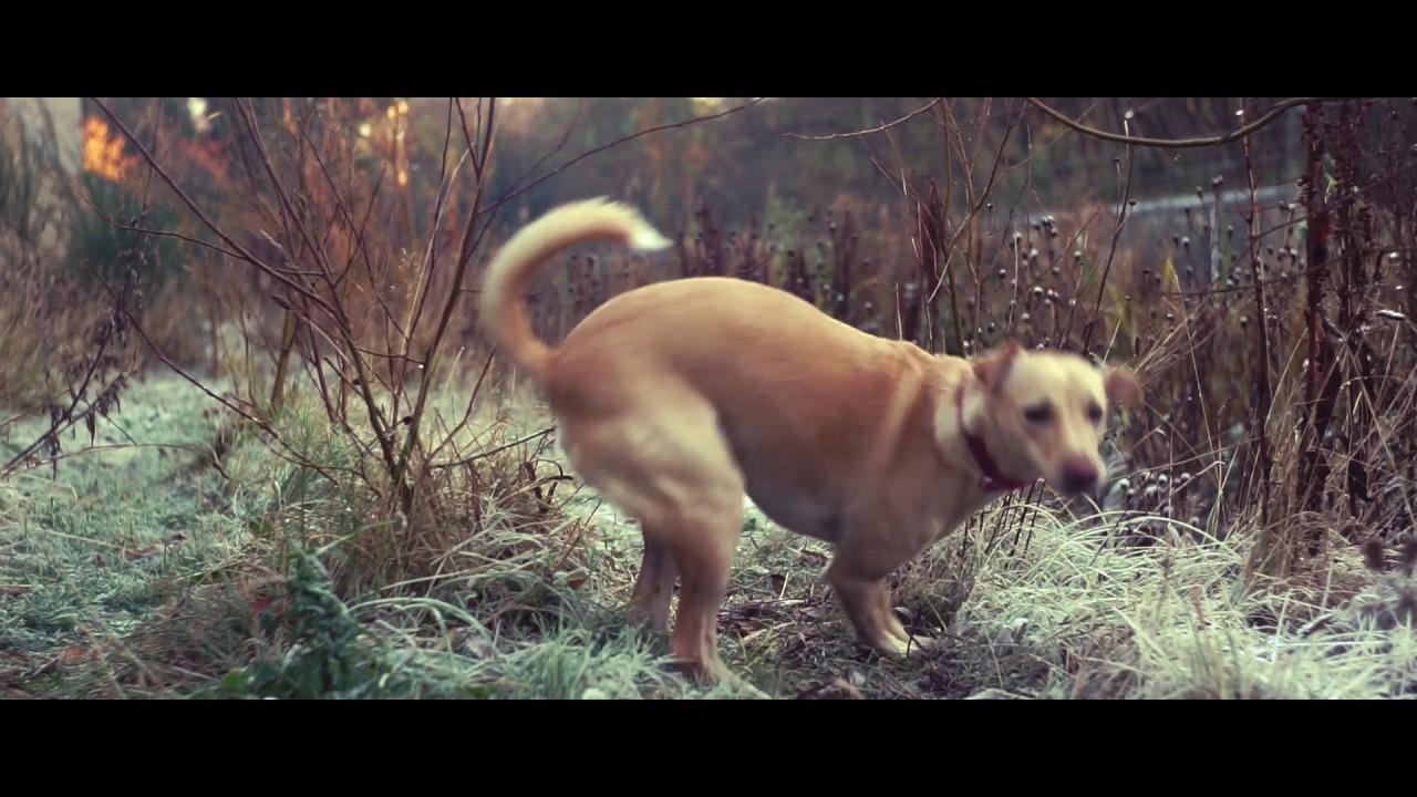 024 - Cinematic grading on Sony A7ii (Helios 44 58mm f2)