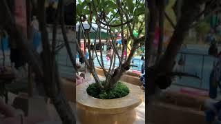 Rawai park Phuket раваи парк на Пхукете 2019