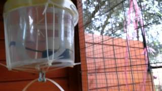Auto Chicken Swing Door Using Weight And Pulley System (1of 2) In Action