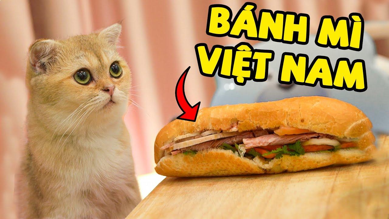 Liệu các bé mèo có thích ăn Bánh Mì Việt Nam? | The Happy Pets
