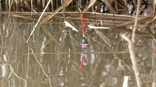 Рыбалка КАРАСЬ Дуреет в КАМЫШАХ Безумная рыбалка на Карася 2021