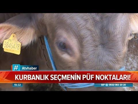 Kurbanlık Seçmenin Püf Noktaları! - Atv Haber 23 Temmuz 2019