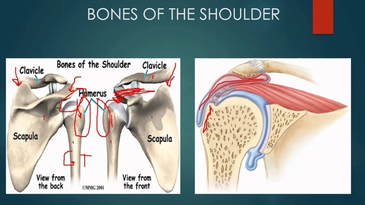 How to Eliminate Shoulder Pain Forever Perry J. Carpenter DC www ...