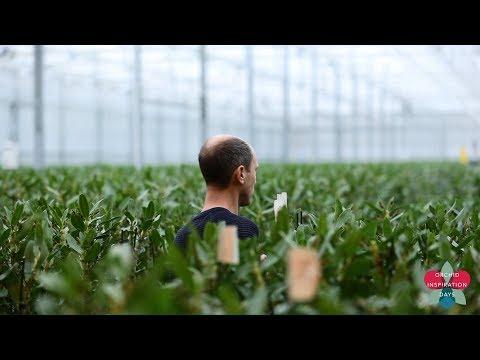 OID 2018 - The Grower Inspires - De Hoog Orchids