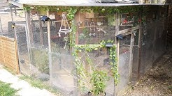 New Tour All our Aviaries inc new Mixed Aviary