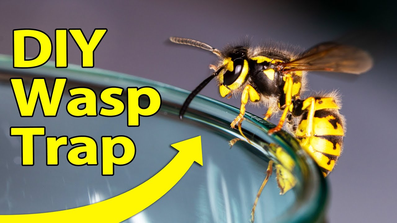 How To Make A Simple Wasp Trap You