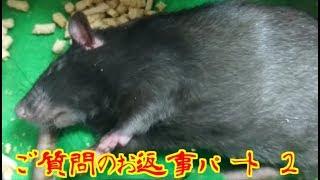 今回の動画は、画質悪くてすみません(*´Д`) 早朝に隣でダンナが寝てる...