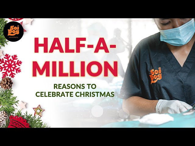 Half-a-million reasons to celebrate the holidays! 🎉