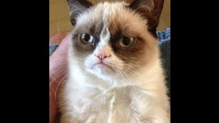 This Funny cats Funny video with cat / Смешные Коты Смешные животные
