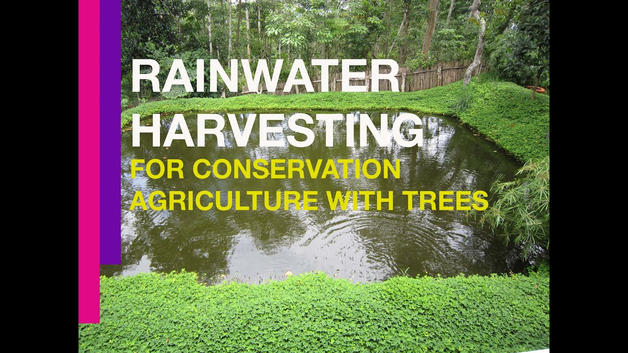 Rainwater Harvesting For Conservation Agriculture With