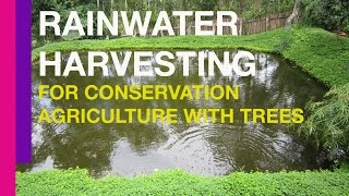 Rainwater Harvesting for Conservation Agriculture with Trees