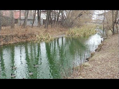 В Кыштыме позеленела река