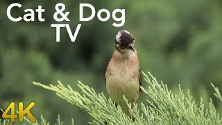TV for Cats and Dogs - Birds Playing in The Garden - 12 Hours 4K