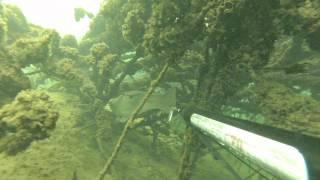Сом Горыныч. Подводная охота на сома.