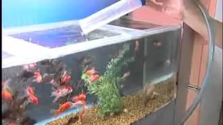 серия видео аквариумы 2(, 2014-01-29T17:30:21.000Z)