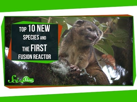Top 10 New Species and the First Fusion Reactor