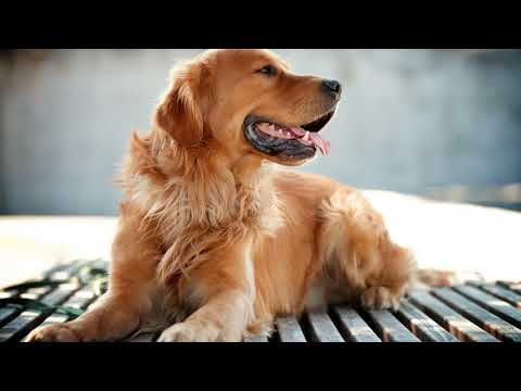 Как убрать запах псины у собаки