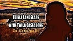 Edible Landscape with Twila Cassadore   San Carlos Apache Homeland