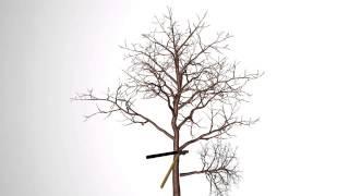 Обрізка фруктових дерев :: Міні інструкція - 5
