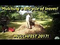 Lawn Care, Mulching a BIG Pile of Leaves! Mulchfest 2017
