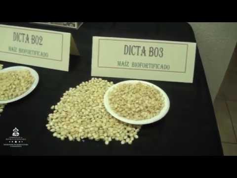 Impulsan alimentos biofortificados para mejorar la nutrición infantil