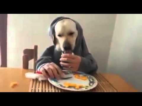 Observa !! a mascota en la mesa