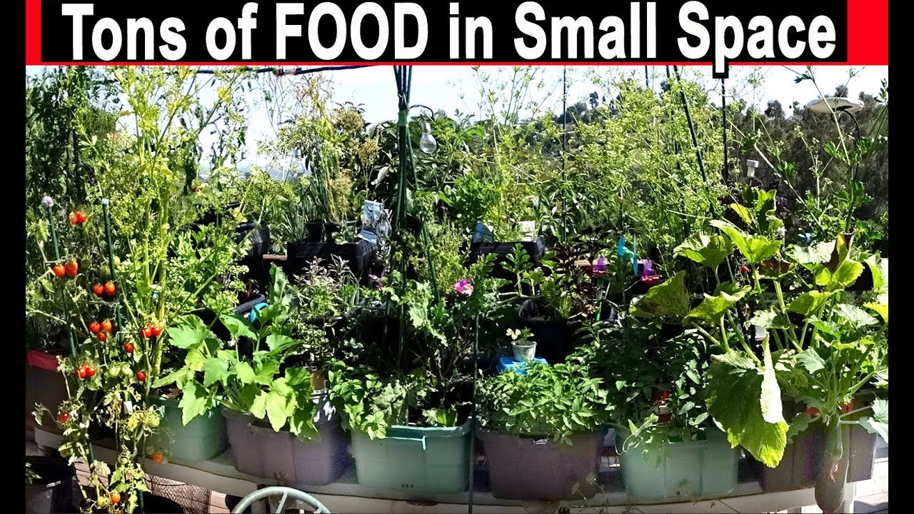 How to Grow Vegetables In Small Spaces Container Gardening ...