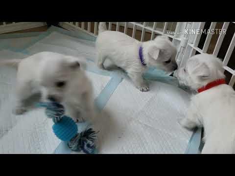 PuppyFinder.com : playtime