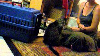 Clicker Training My Cat, Tigress, To Enter Her Crate.