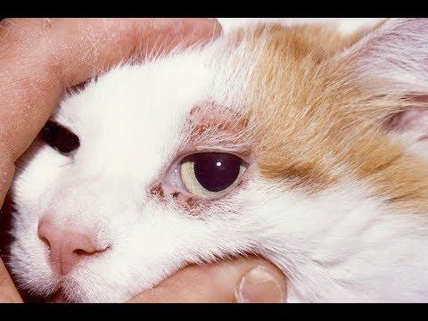Del gato orejas en las manchas