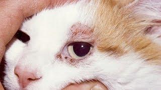 Duele a pierna qué les gatos? la ¿Por mis