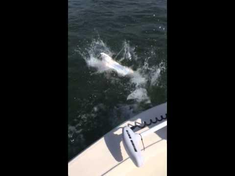 Fishing Fort Myers Beach - Fishing Buddy Charters
